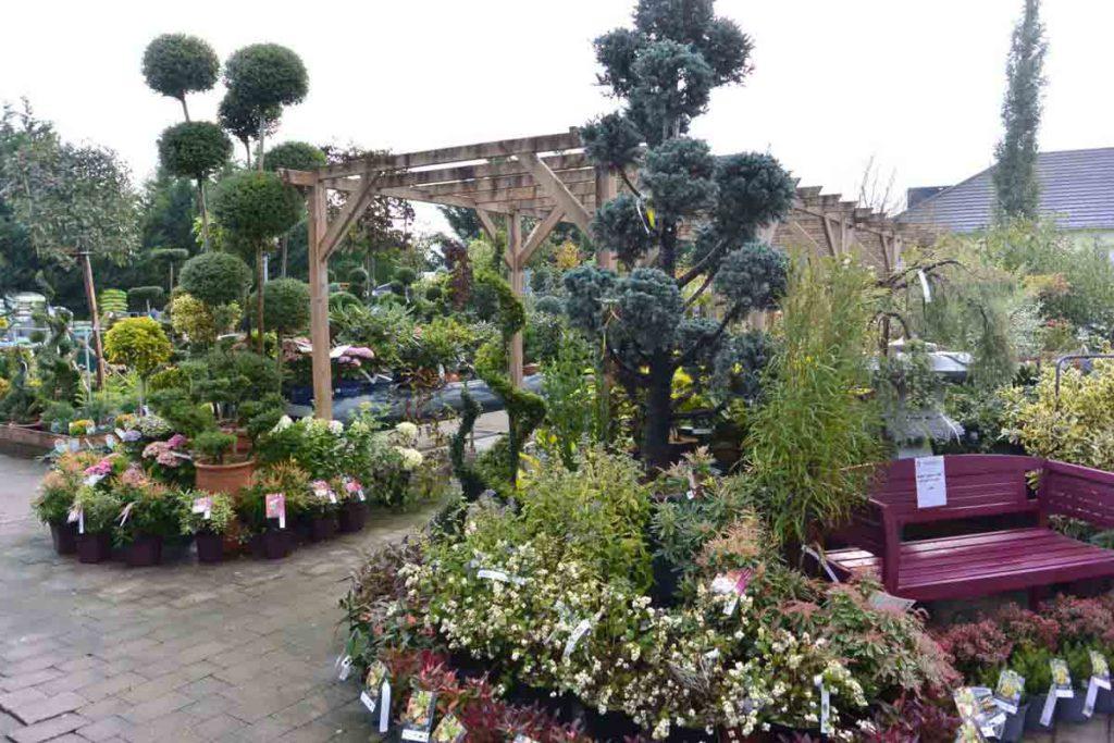 P pini re jardinerie de l 39 ill for Plantes jardinerie
