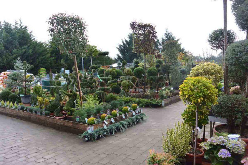 p pini re jardinerie de l 39 ill On jardinerie plantes