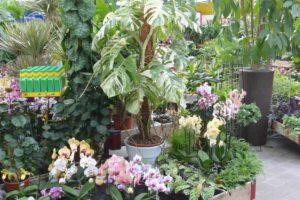 Aménagez votre intérieur avec les plante verte de la jardinerie de l'ill à Altkirch